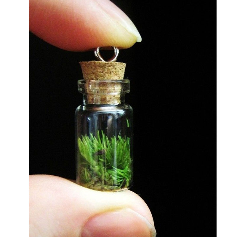 Wearable Terrariums